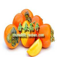 果树树苗柿子树柿子树苗日本甜柿香甜可口