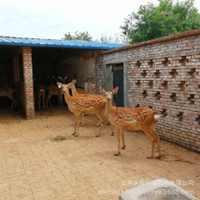 梅花鹿常年批发宠物梅花鹿活体梅花鹿养殖赚钱吗梅花鹿的种类