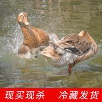 白条鸭冷冻新鲜超市速冻草鸭水鸭酒店饭店清水麻鸭厂家贴牌