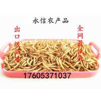 供应出口级黄粉虫干面包虫干黄粉虫黄粉虫虫粪养殖盒等