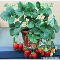 。【草莓苗盆栽】带土南北方种植当年结果食用牛奶草莓秧阳台带