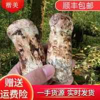 楷美新鲜松茸野生菌顺丰包邮香格里拉1kg新鲜松茸诚招代理