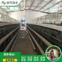 新华禽畜厂家直销大量供应青年青脚土鸡苗扶贫脱温鸡鸡苗