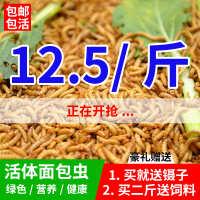 黄粉虫面包虫活体鲜活虫种虫龙鱼乌龟仓鼠宠物活体饲料500g