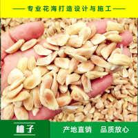 酸柚酸柚种子产地直销免费提供播种技术量大从优