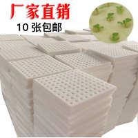水培育苗海绵块无土栽培设备圆孔方形定植篮搭配蔬菜定植棉条基质